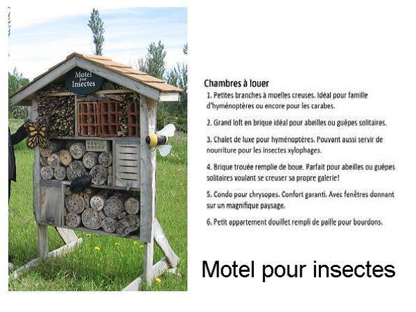 Motel insectes